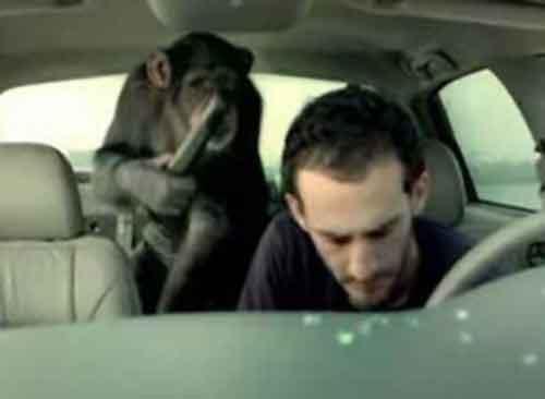 suburban trunk monkey videos dating